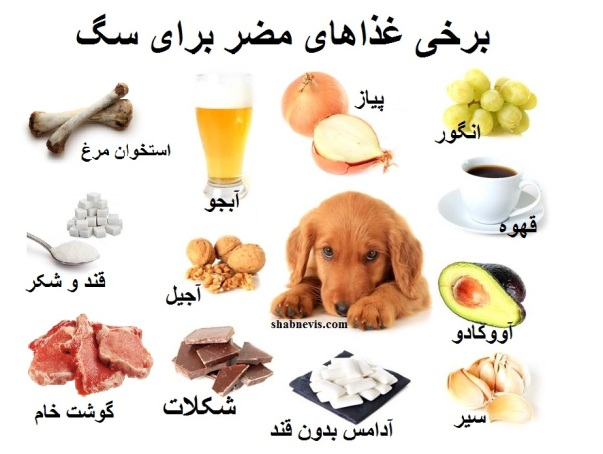 foods-dogs-should-not-eat-human-foods-that-are-dangerous-to-dogs