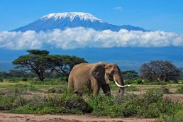 tanzania-mount-kilimanjaro